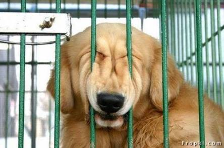 dog-in-cage
